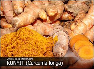 Manfaat dari Kunyit (Curcuma longa) yang belum diketahui