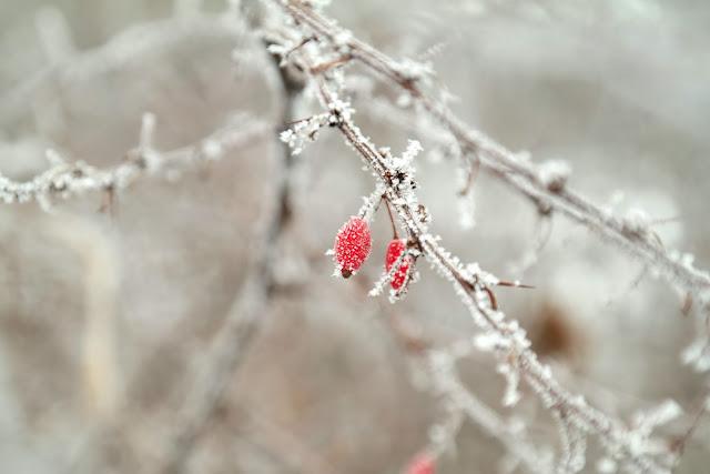 Fotografie winter Leipzig macro