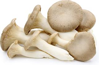 mushroom cultivation training osmanabad
