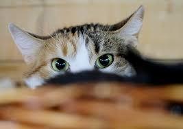 عمل إنساني كبير لعناصر الوقاية المدنية بايت ملول بعد  انقاذ قطة عالقة بنافدة إحدى البنايات السكنية