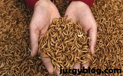 Maggot production free eBook download