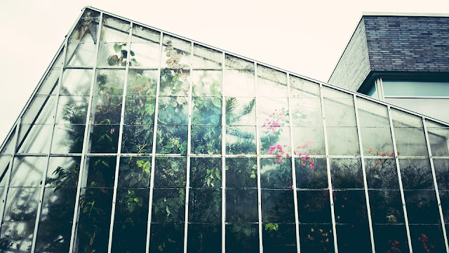 serra-piante-verde