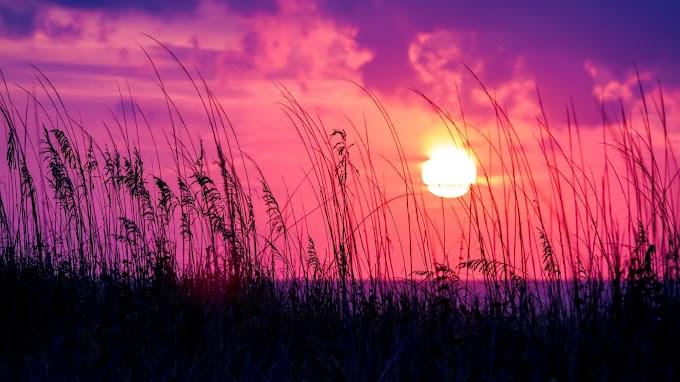 Pôr do Sol Rosa, Silhueta, Grama, Nuvens