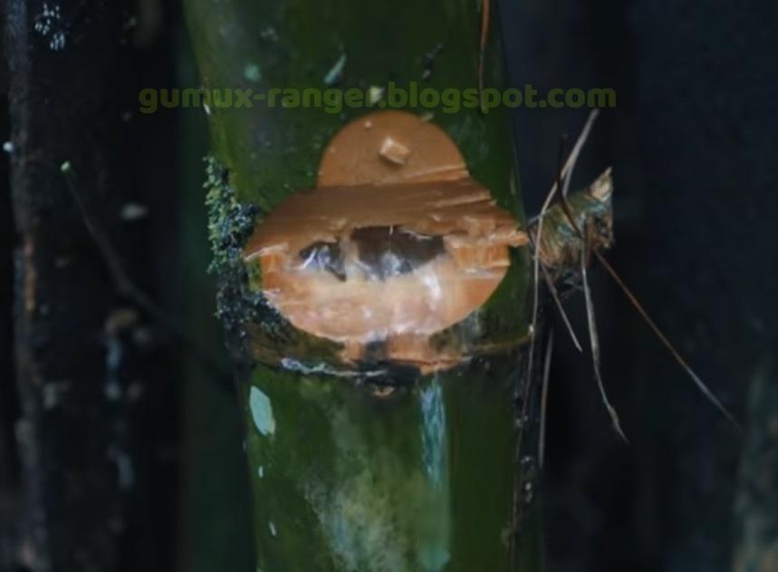 Sumber Air dari Bambu