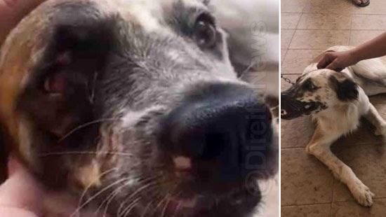 cachorro acao judicial assina processo pata