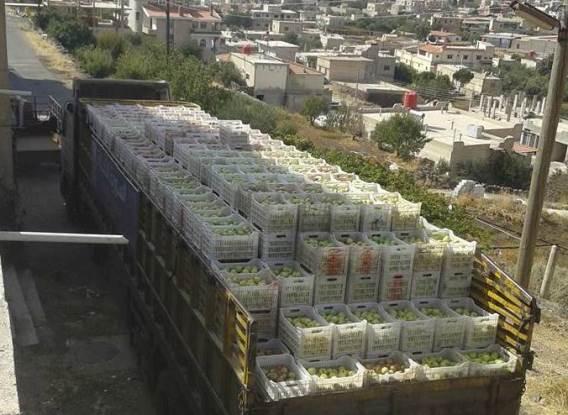 تصدير أكثر من 16 ألف طن تفاح من السويداء للأسواق الخارجية