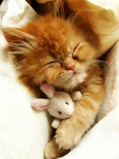 Funny red cat and bunny.