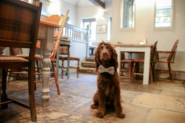 A Dog Friendly Guide to The Cotswolds
