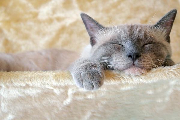 Makna Dibalik Posisi Tidur Kucing