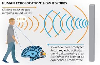 human echolocation
