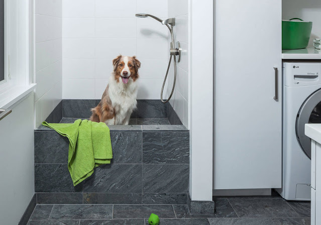 Why Does My Dog Follow Me to the Bathroom?