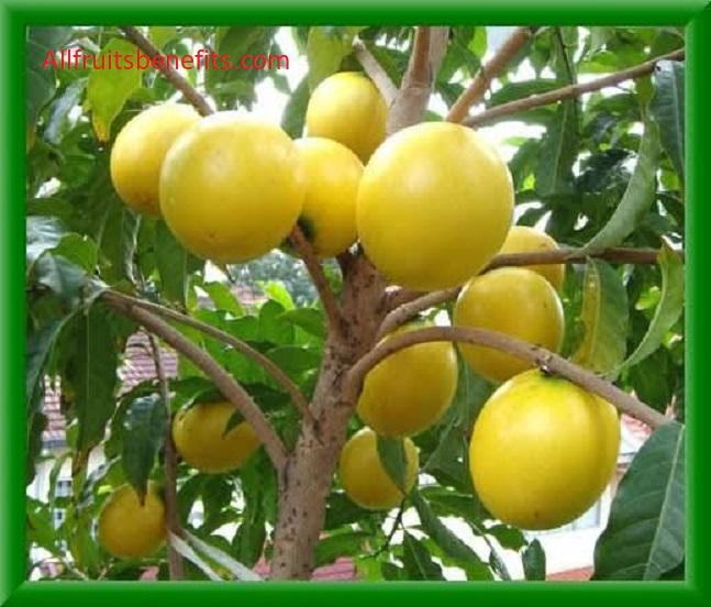 Benefits of abiu fruits