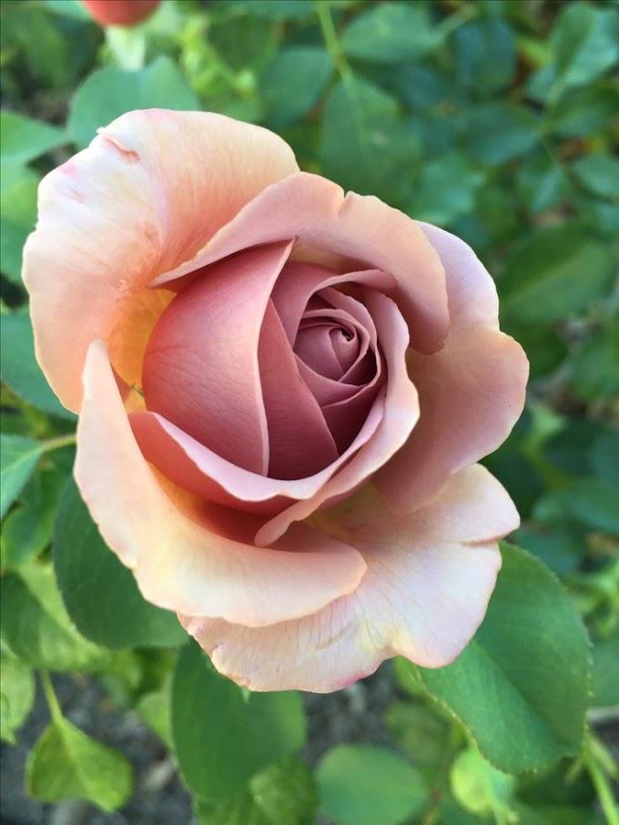 Foto Bunga ini bikin kamu semangat lagi berkebun