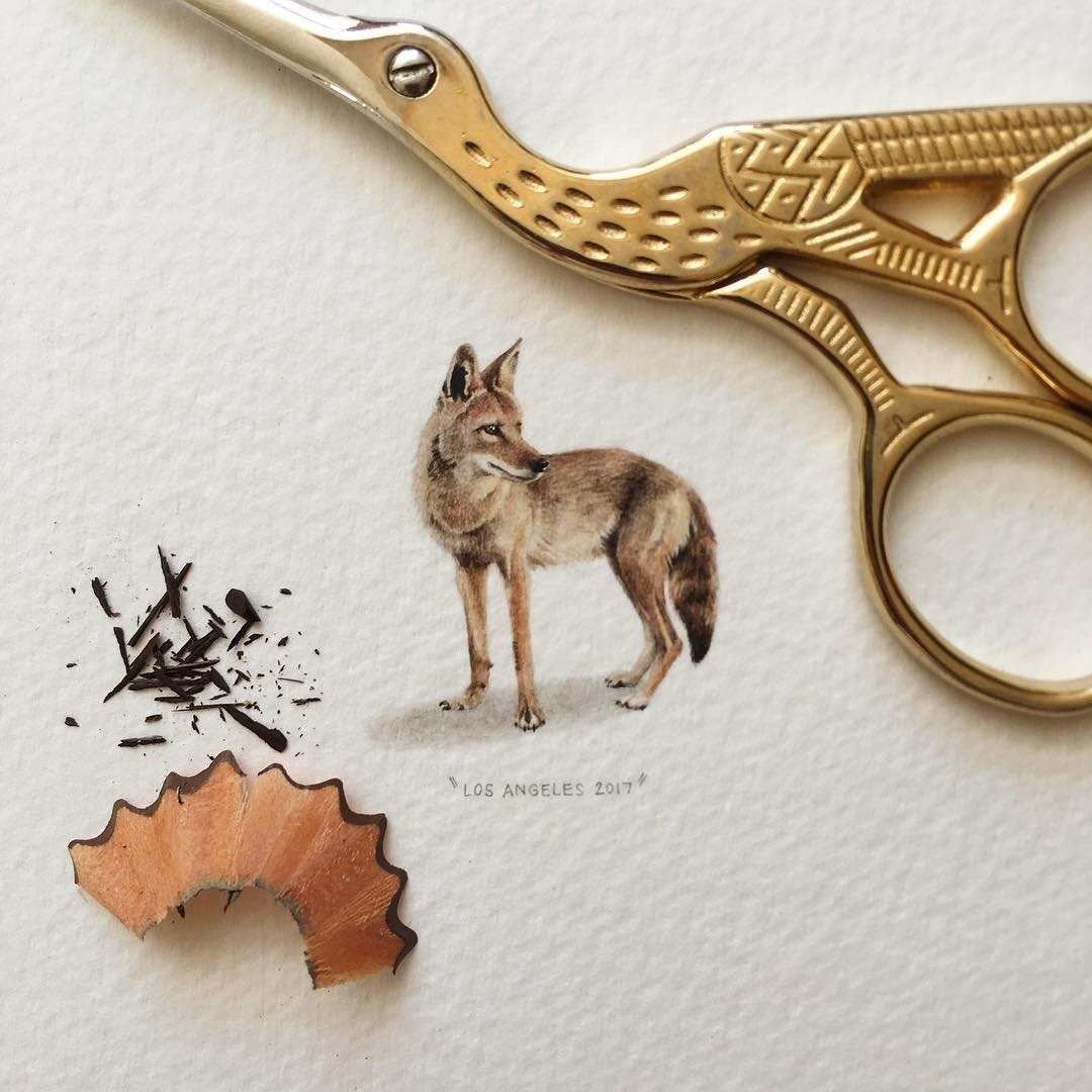 Coyote by Lorraine Loots