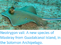 https://sciencythoughts.blogspot.com/2017/12/neotrygon-vali-new-species-of-maskray.html