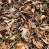 Pembuatan pupuk kompos secara sederhana dan mudah