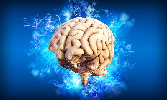 The Adult Brain – How to keep it healthy?