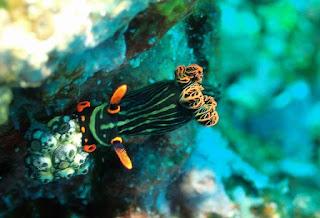 Gandeng Pemkot, Bima Dive Akan Menggelar Kegiatan Ekspedisi Teluk Bima