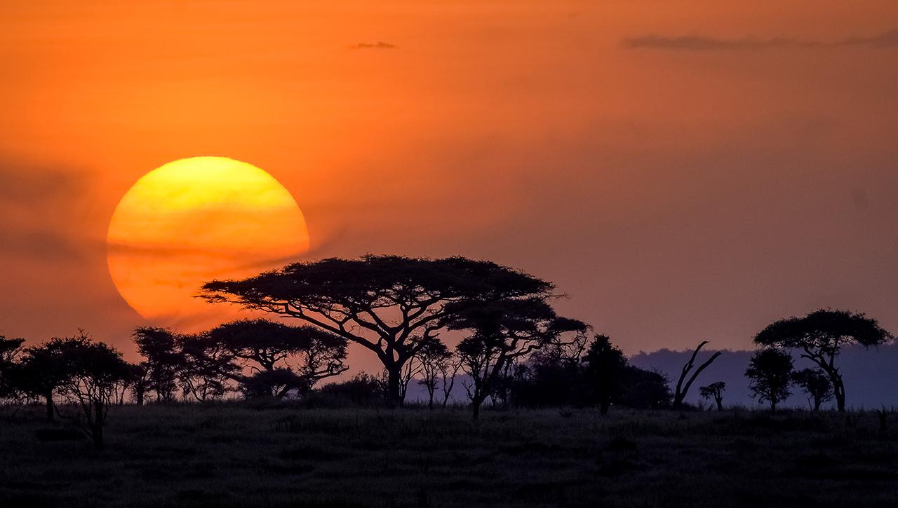 Serengeti, Tanzania wisata alam liar Wild Live animal