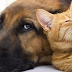 Centro de Zoonoses e Controle de Vetores promovem censo de cães e gatos na cidade
