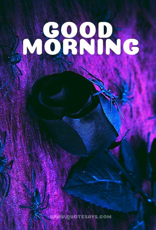 Good morning violate rose