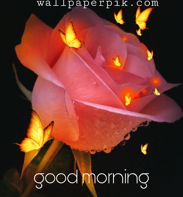 rose flower butterfly good morning cute image