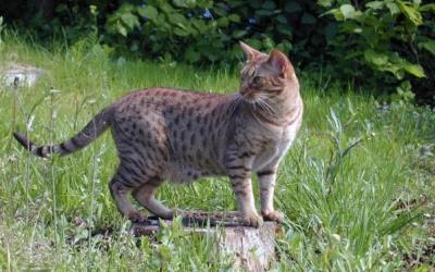 Kucing Adalah Hewan dengan Naluri Dasar Nomaden