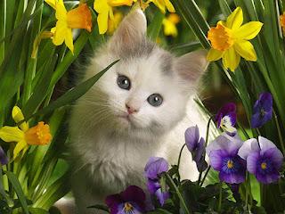 اجمل الخلفيات الحلوة للحيوانات، صور قطط كيوت خلفيات 2