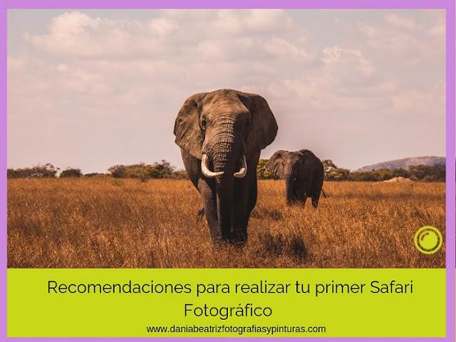 safari-fotografico-viajar-a-africa
