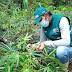 Ucayali: SENASA promueve las Buenas Prácticas Agrícolas en la mesa técnica del cultivo de yuca