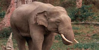 معنى رؤيا الفيل في الحلم لابن سيرين وعبد الغني النابلسي