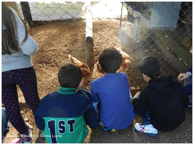 Observando  gallinas- Chacra Educativa Sta. Lucía
