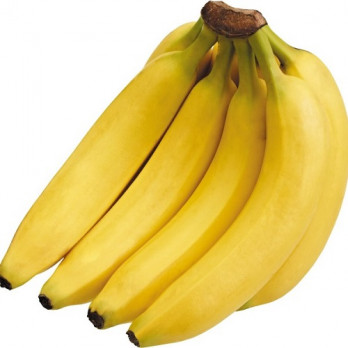 budidaya pisang ambon