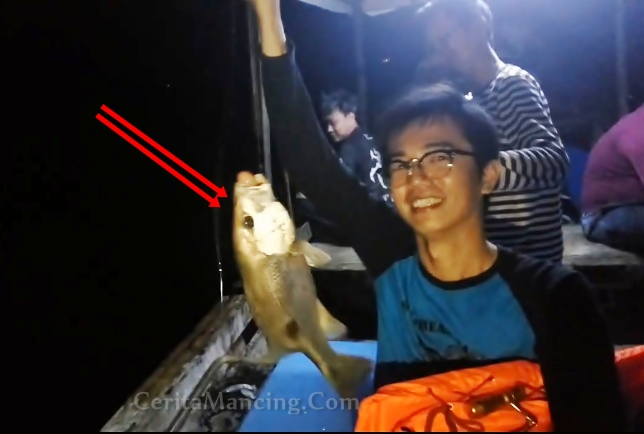 Mancing Strike Ikan Jarang Gigi Asli Bukan Kawe Kawe