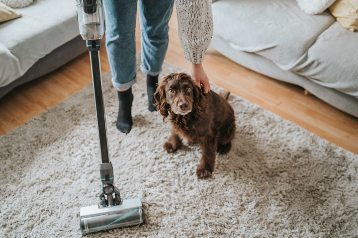 Top Cleaning Tips for Dog Owners