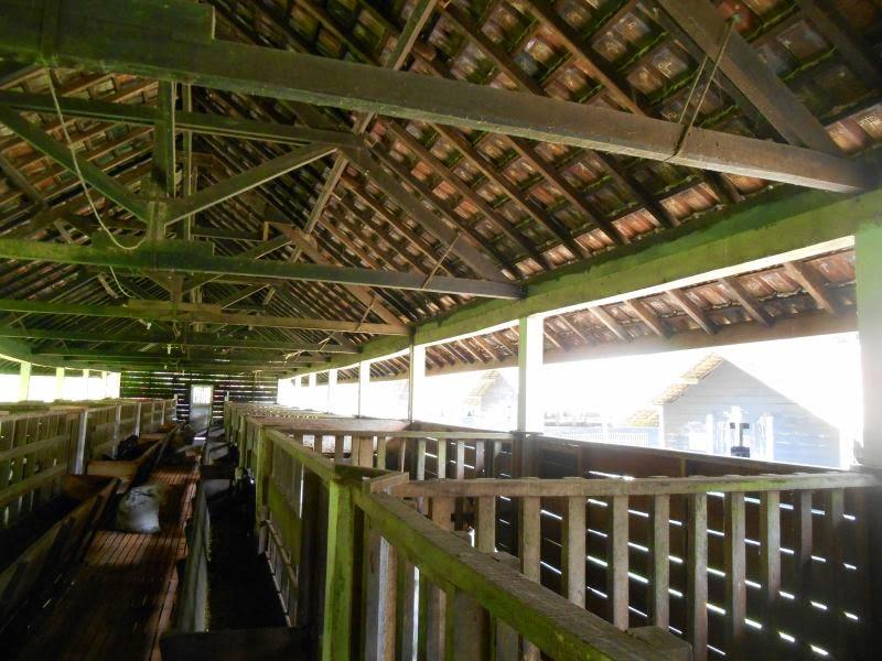 area kandang kambing model panggung