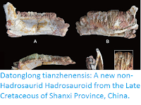 https://sciencythoughts.blogspot.com/2016/04/datonglong-tianzhenensis-new-non.html