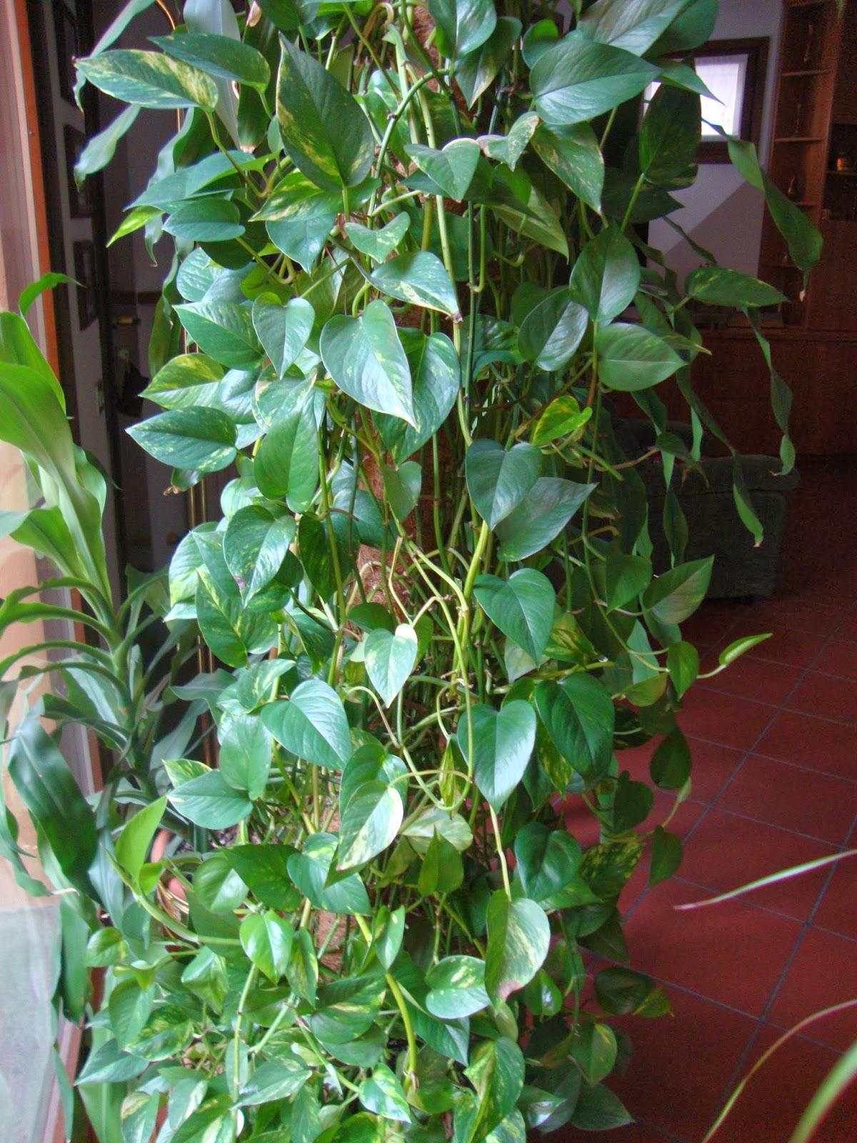 Un piccolo giardino in citt una pianta facile per la for Solo piante