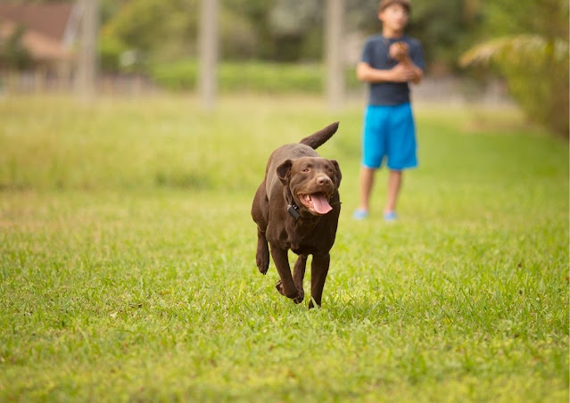 Conquering the Challenge of Training Your Dog