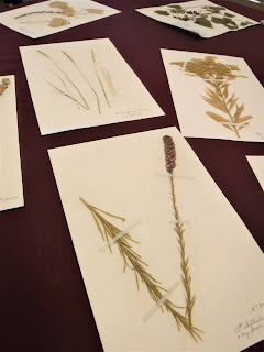 replicas of Meriweather Lewis' herbarium are displayed on a maroon tablecloth at the Sioux City Lewis and Clark Expedition museum
