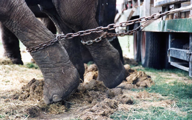 animals in the circus are maltreated
