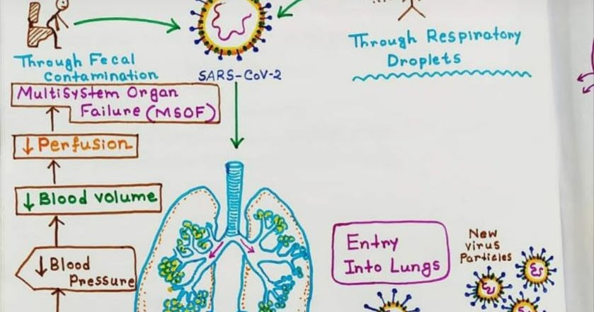 Medicowesome: COVID-19: Pathophysiology And Microbiology
