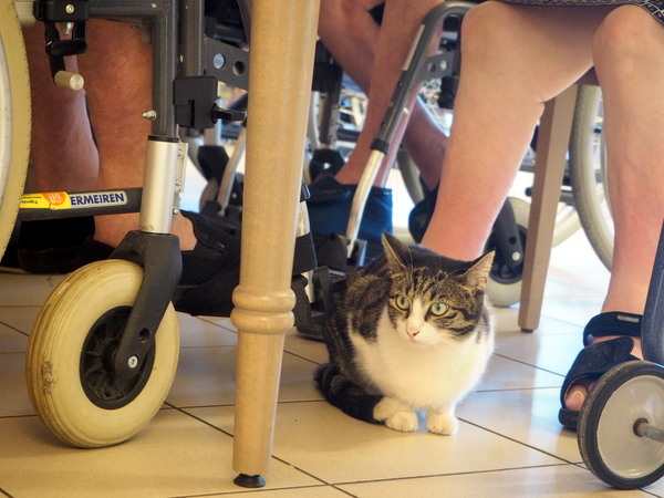cat in elderly home