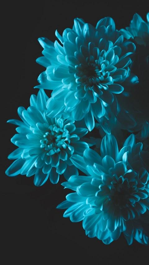 Hoa cúc xanh đẹp