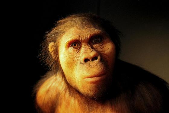 imagen_museo_burgos_evolucion_humana_hominido