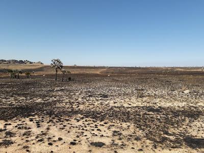 terrenos-quemados-para-producir-pastos-en-isalo-madagascar