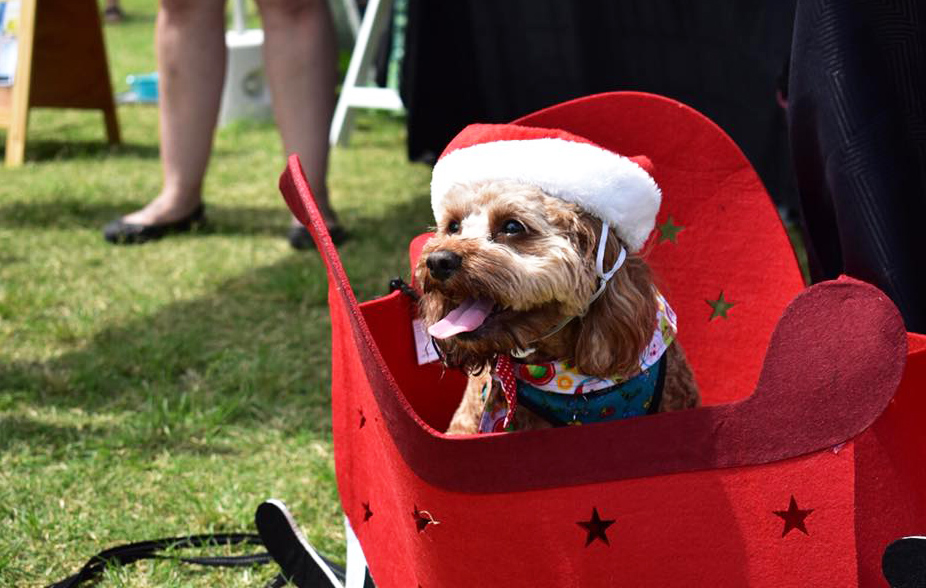 Oodle wearing Santa hat in a Christmas themed cart at Santa Paws in the Park