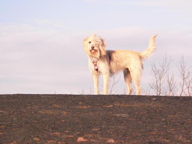 Mina Straßenhund Alltag Hund