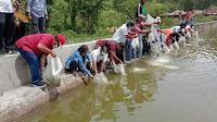 40.000 Benih Ikan Nila Ditabur Di Perairan Umum Daratan/Pea