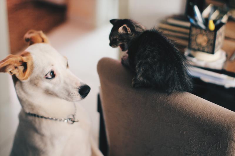 gato e cachorro na mesma casa